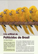 Ararajuba_Guarouba_psitacideo_Psittacidae_Criacao_na_mao_artificial_biologa_200