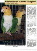 Pionites_leucogaster_marianinha_aviornis_reproducao_recinto_manejo_psitacideo_Psittacidae_200